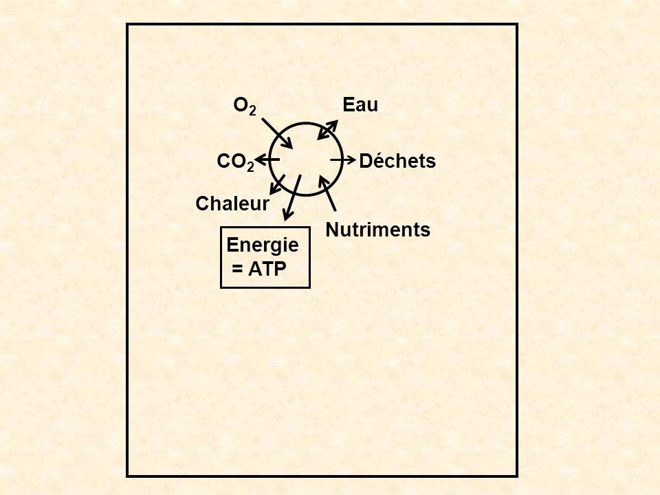 O2O2 CO 2 Chaleur Energie = ATP Nutriments Déchets Eau