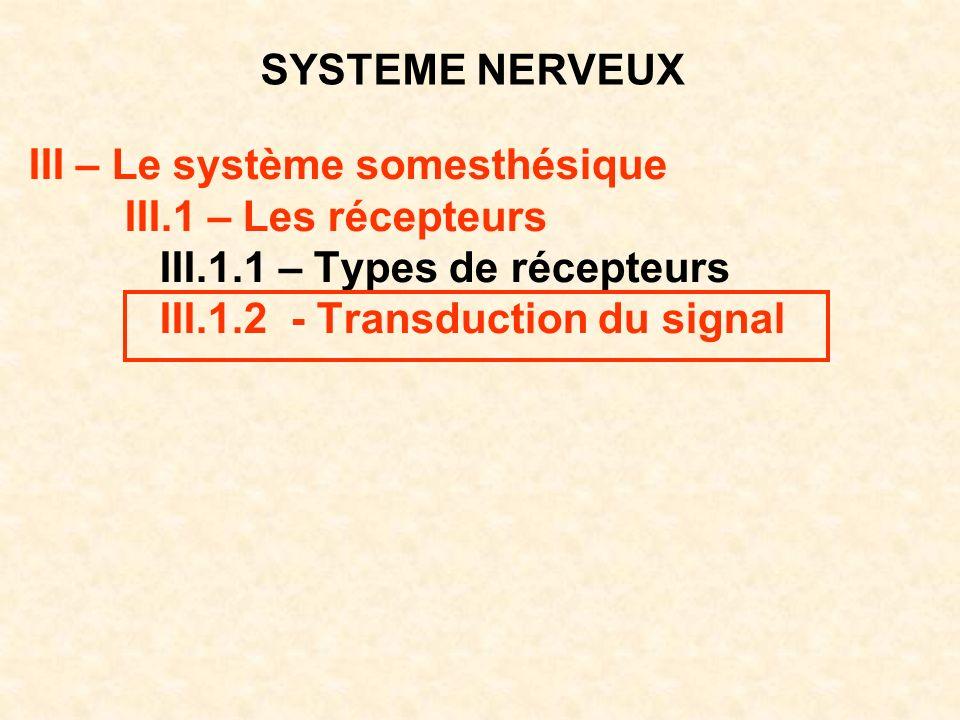 SYSTEME NERVEUX III – Le système somesthésique III.1 – Les récepteurs III.1.1 – Types de récepteurs III.1.2 - Transduction du signal