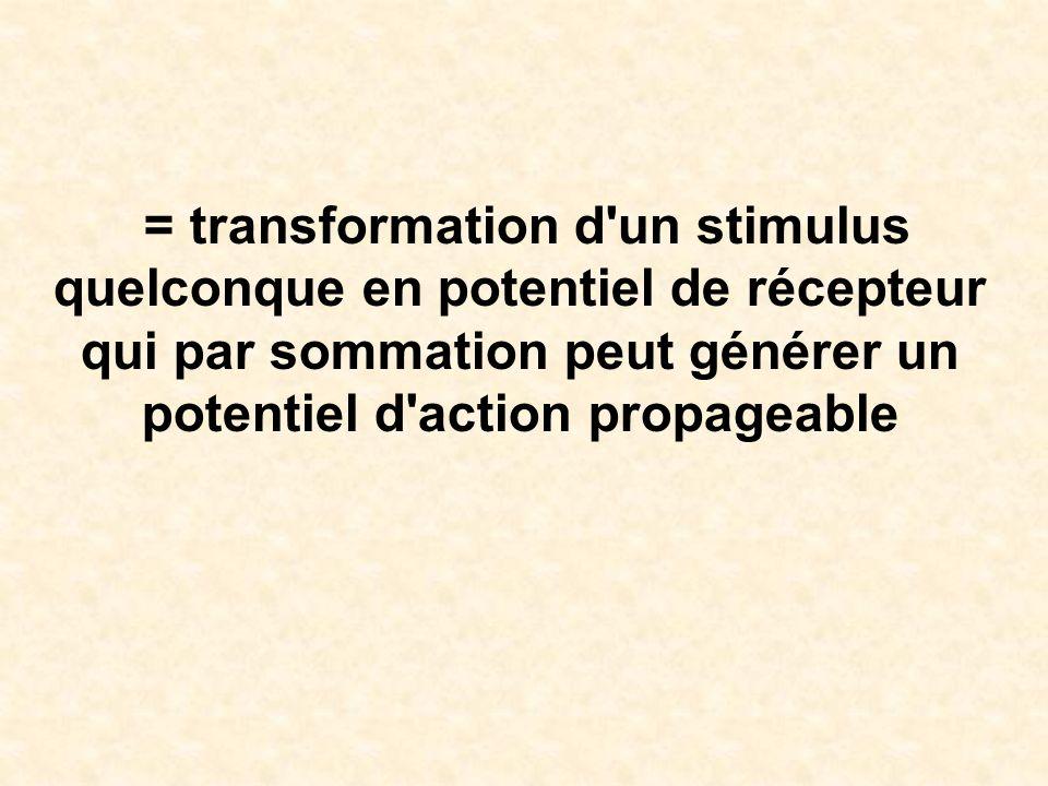 = transformation d'un stimulus quelconque en potentiel de récepteur qui par sommation peut générer un potentiel d'action propageable