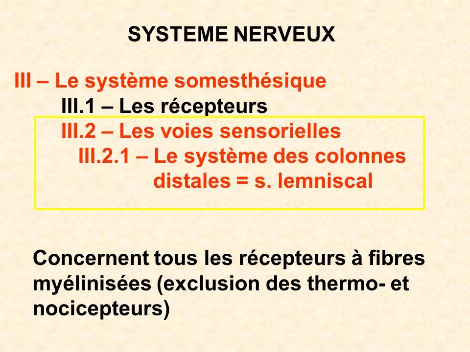 SYSTEME NERVEUX III – Le système somesthésique III.1 – Les récepteurs III.2 – Les voies sensorielles III.2.1 – Le système des colonnes distales = s. l