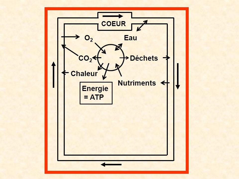 O2O2 CO 2 Chaleur Energie = ATP Nutriments Déchets Eau COEUR