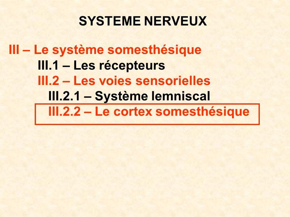 SYSTEME NERVEUX III – Le système somesthésique III.1 – Les récepteurs III.2 – Les voies sensorielles III.2.1 – Système lemniscal III.2.2 – Le cortex s