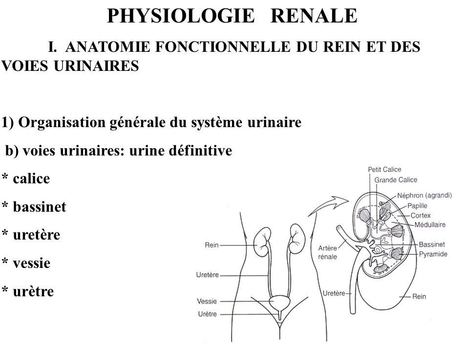 PHYSIOLOGIE RENALE I. ANATOMIE FONCTIONNELLE DU REIN ET DES VOIES URINAIRES 1) Organisation générale du système urinaire b) voies urinaires: urine déf