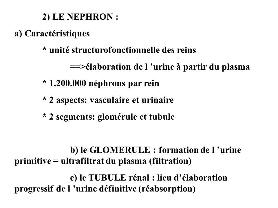 2) LE NEPHRON : a) Caractéristiques * unité structurofonctionnelle des reins ==>élaboration de l urine à partir du plasma * 1.200.000 néphrons par rein * 2 aspects: vasculaire et urinaire * 2 segments: glomérule et tubule b) le GLOMERULE : formation de l urine primitive = ultrafiltrat du plasma (filtration) c) le TUBULE rénal : lieu délaboration progressif de l urine définitive (réabsorption)