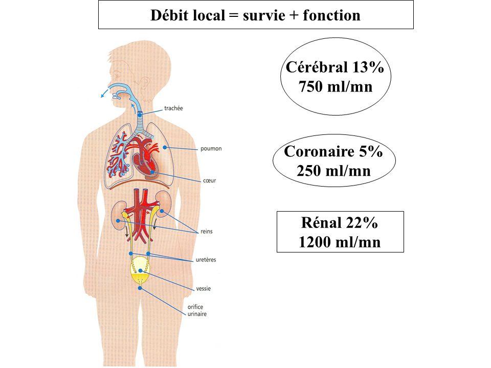 Débit local = survie + fonction Cérébral 13% 750 ml/mn Coronaire 5% 250 ml/mn Rénal 22% 1200 ml/mn