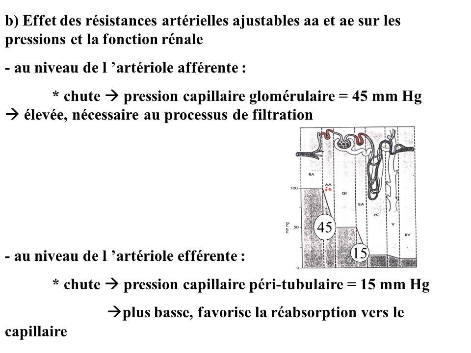b) Effet des résistances artérielles ajustables aa et ae sur les pressions et la fonction rénale - au niveau de l artériole afférente : * chute pression capillaire glomérulaire = 45 mm Hg élevée, nécessaire au processus de filtration - au niveau de l artériole efférente : * chute pression capillaire péri-tubulaire = 15 mm Hg plus basse, favorise la réabsorption vers le capillaire 45 15