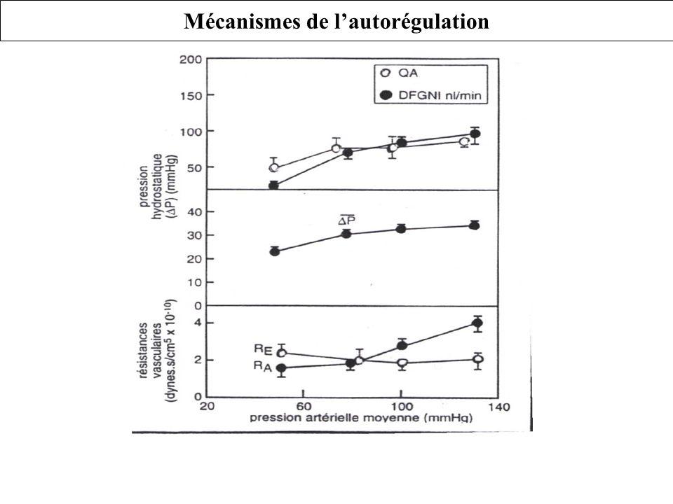 Mécanismes de lautorégulation