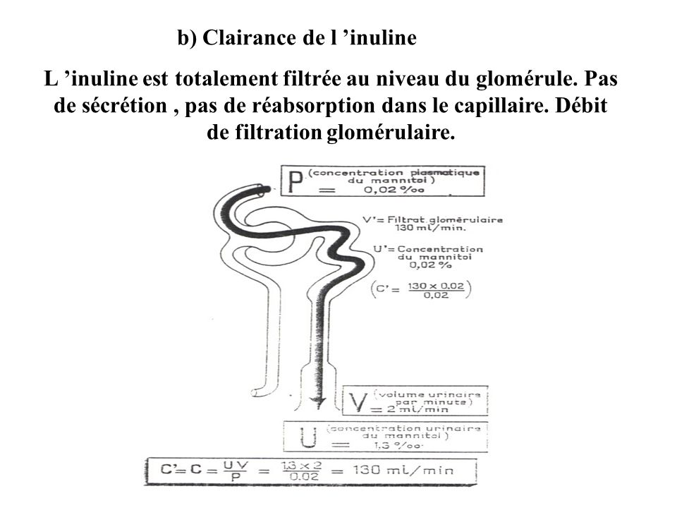 b) Clairance de l inuline L inuline est totalement filtrée au niveau du glomérule. Pas de sécrétion, pas de réabsorption dans le capillaire. Débit de