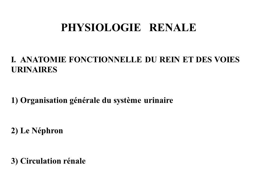 PHYSIOLOGIE RENALE I. ANATOMIE FONCTIONNELLE DU REIN ET DES VOIES URINAIRES 1) Organisation générale du système urinaire 2) Le Néphron 3) Circulation