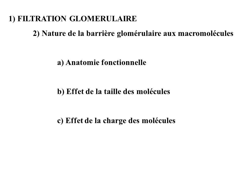 1) FILTRATION GLOMERULAIRE 2) Nature de la barrière glomérulaire aux macromolécules a) Anatomie fonctionnelle b) Effet de la taille des molécules c) Effet de la charge des molécules
