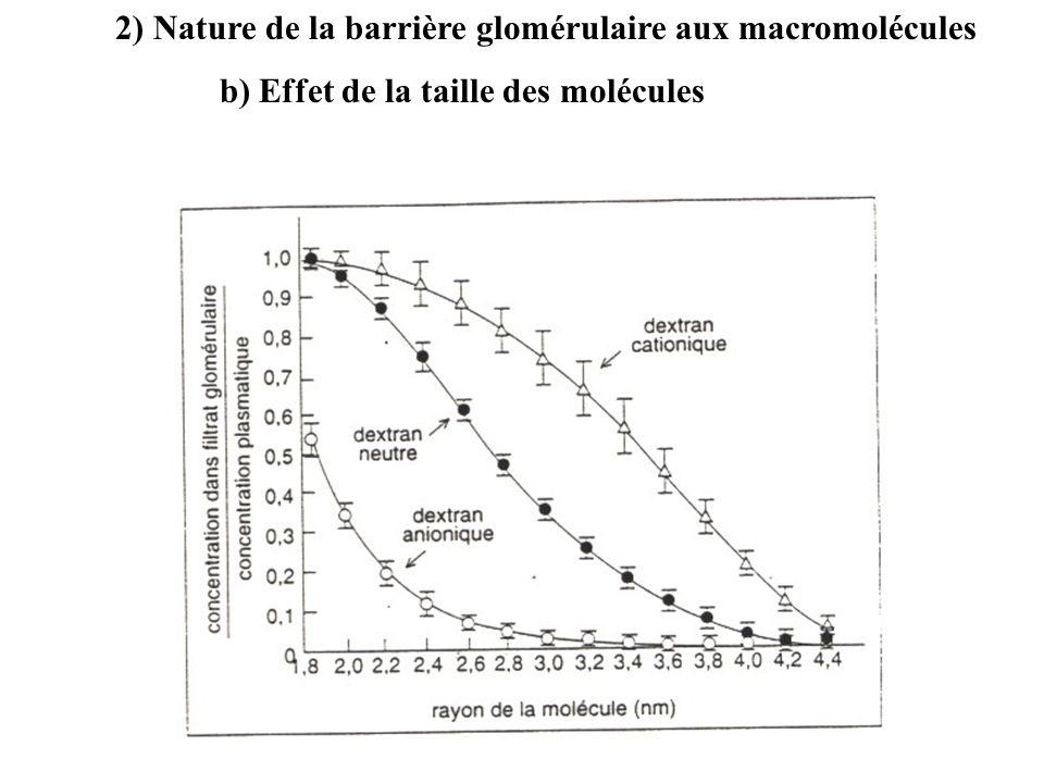 2) Nature de la barrière glomérulaire aux macromolécules b) Effet de la taille des molécules