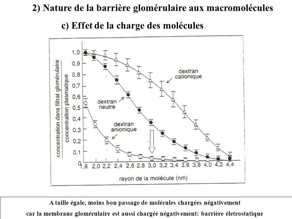 2) Nature de la barrière glomérulaire aux macromolécules c) Effet de la charge des molécules A taille égale, moins bon passage de molécules chargées négativement car la membrane glomérulaire est aussi chargée négativement: barrière életrostatique
