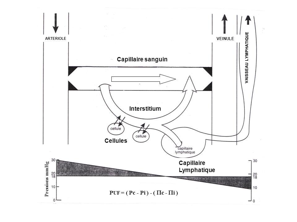 Capillaire sanguin Interstitium Cellules Capillaire Lymphatique ARTERIOLE VEINULE Pressions mmHg P UF = ( Pc - Pi ) - ( c - i ) VAISSEAU LYMPHATIQUE