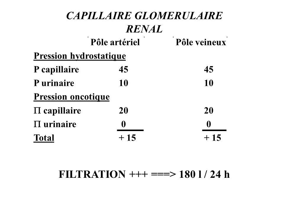 CAPILLAIRE GLOMERULAIRE RENAL Pôle artérielPôle veineux Pression hydrostatique P capillaire4545 P urinaire1010 Pression oncotique capillaire2020 urinaire 0 0 Total+ 15+ 15 FILTRATION +++ ===> 180 l / 24 h