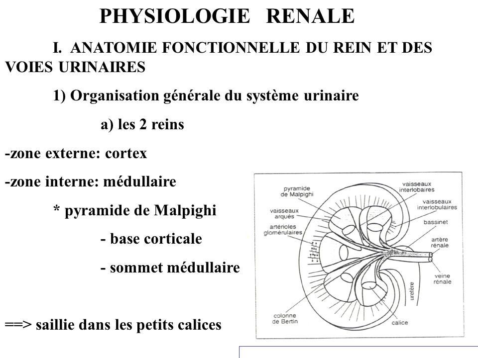 PHYSIOLOGIE RENALE I. ANATOMIE FONCTIONNELLE DU REIN ET DES VOIES URINAIRES 1) Organisation générale du système urinaire a) les 2 reins -zone externe: