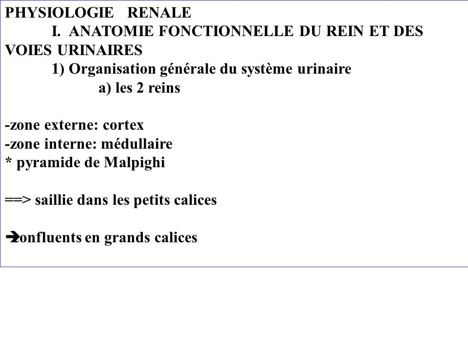 PHYSIOLOGIE RENALE I.