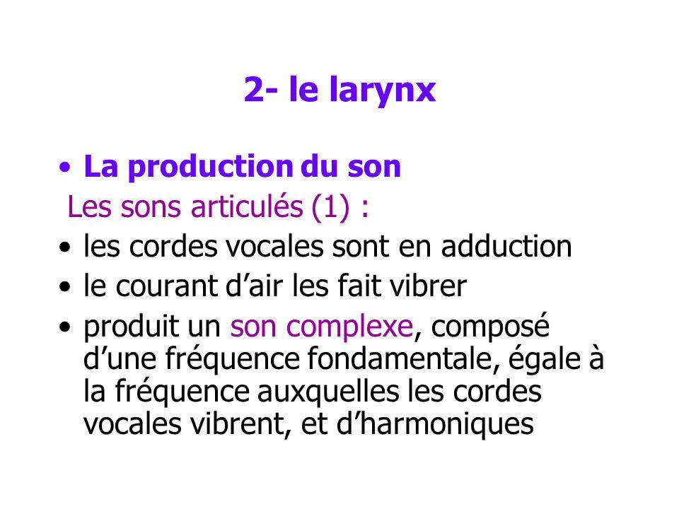 2- le larynx La production du son Les sons non-articulés (cris, rire…) –sont produits alors que les cordes vocales sont en abduction –écoulement turbu
