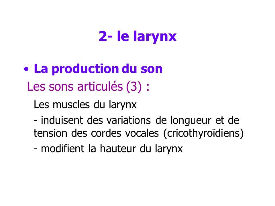 2- le larynx La production du son Les sons articulés (2) : La fréquence fondamentale est déterminée principalement –par la tension des cordes vocales