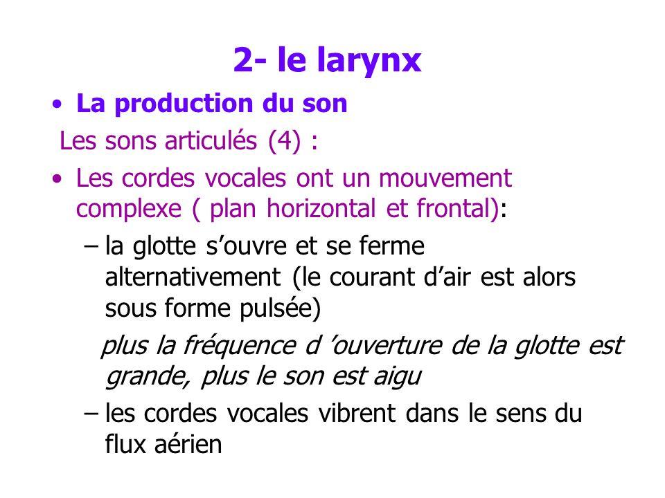 2- le larynx La production du son Les sons articulés (3) : Les muscles du larynx - induisent des variations de longueur et de tension des cordes vocal