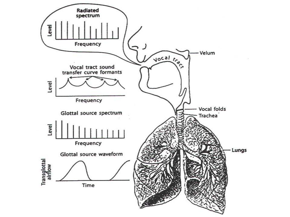 3- Le conduit vocal La courbe de fréquence est alors caractérisée –par des pics, appelés formants et correspondant aux résonances induites par le cond