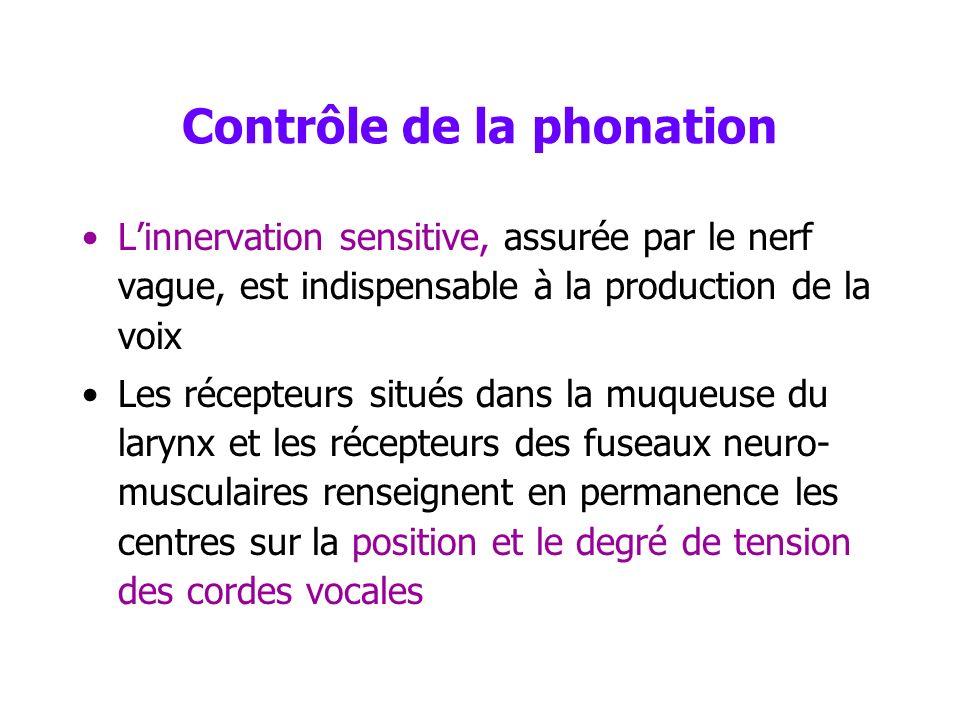 Contrôle de la phonation Les signaux efférents –proviennent du cortex –parviennent au noyau du vague (X, tronc cérébral) Le nerf vague assure linnerva
