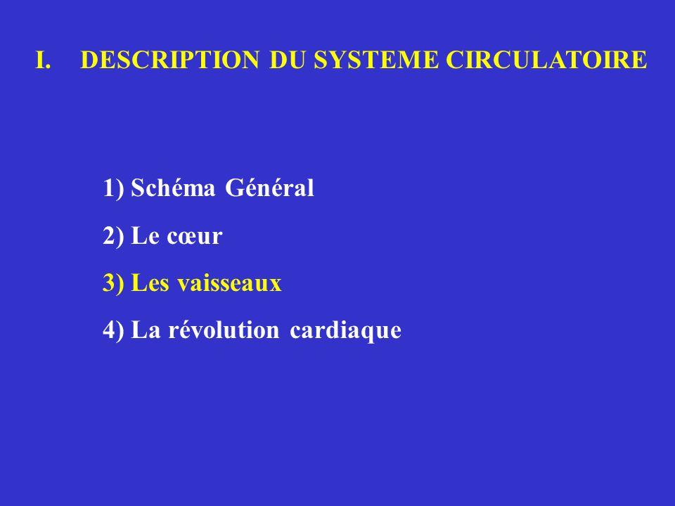 Place de la diastole dans le cycle cardiaque (définitions physiologiques)