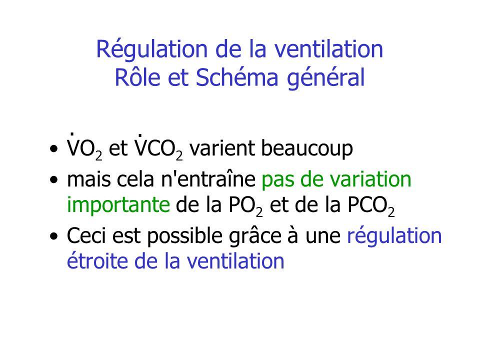 Modulation de la ventilation les récepteurs et boucles réflexes Les récepteurs broncho - pulmonaires en fonction du stimulus : à lirritation mécanorécepteurs récepteurs « J » Les récepteurs extra-pulmonaires