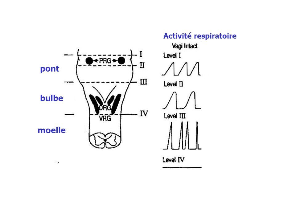 Réponse aux variations de PO 2 alvéolaires FiO2 PAO2 PaO2 de la ventilation VE Le patient respire un mélange gazeux à faible FiO2