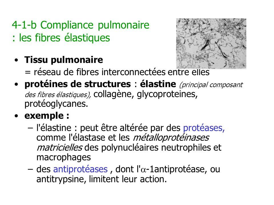 4-1-b Compliance pulmonaire : les fibres élastiques Tissu pulmonaire = réseau de fibres interconnectées entre elles protéines de structures : élastine