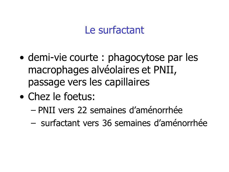 Le surfactant demi-vie courte : phagocytose par les macrophages alvéolaires et PNII, passage vers les capillaires Chez le foetus: –PNII vers 22 semain