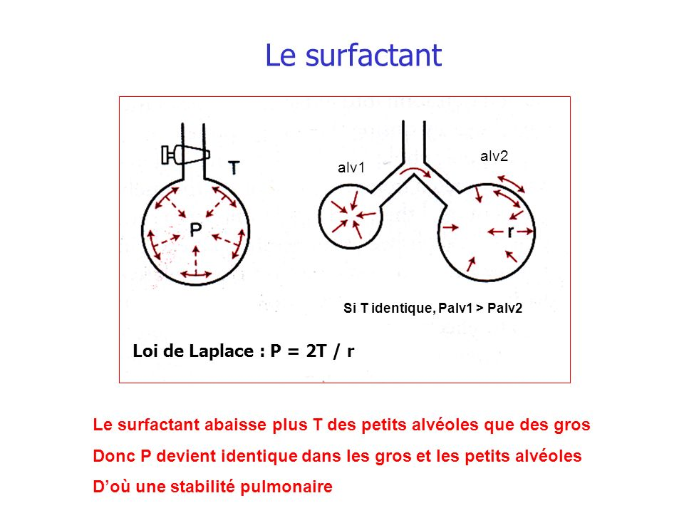 Le surfactant Loi de Laplace : P = 2T / r Le surfactant abaisse plus T des petits alvéoles que des gros Donc P devient identique dans les gros et les