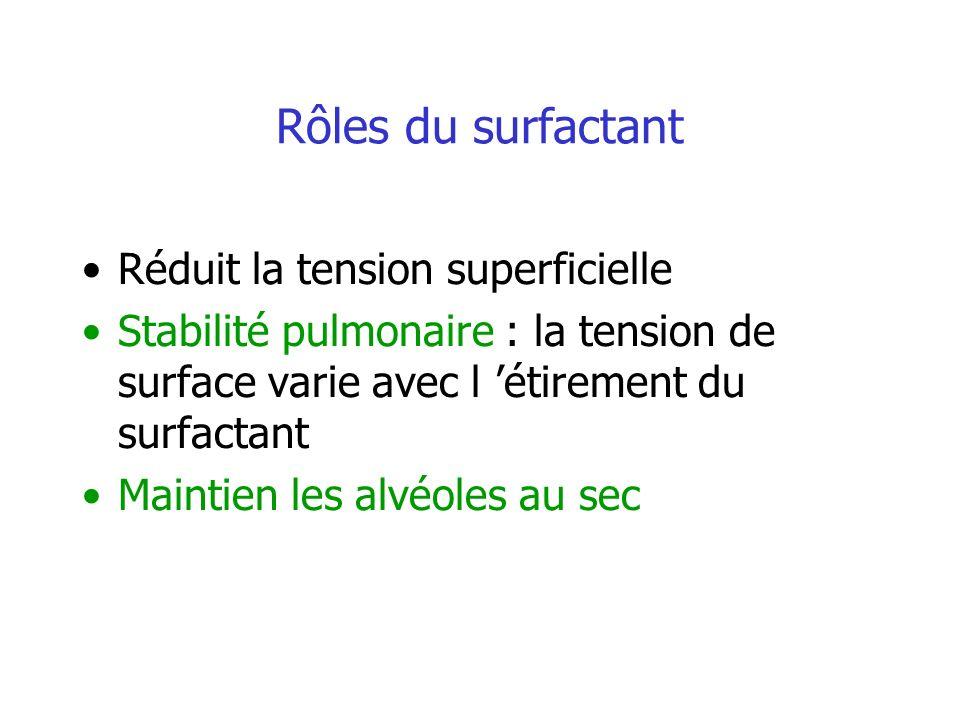 Rôles du surfactant Réduit la tension superficielle Stabilité pulmonaire : la tension de surface varie avec l étirement du surfactant Maintien les alv