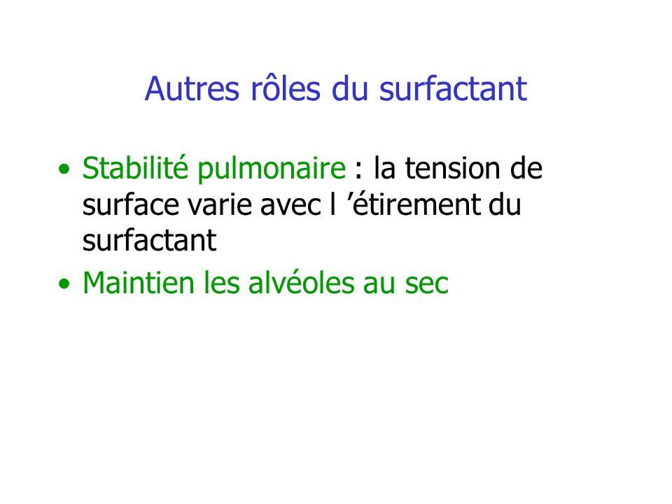 Autres rôles du surfactant Stabilité pulmonaire : la tension de surface varie avec l étirement du surfactant Maintien les alvéoles au sec
