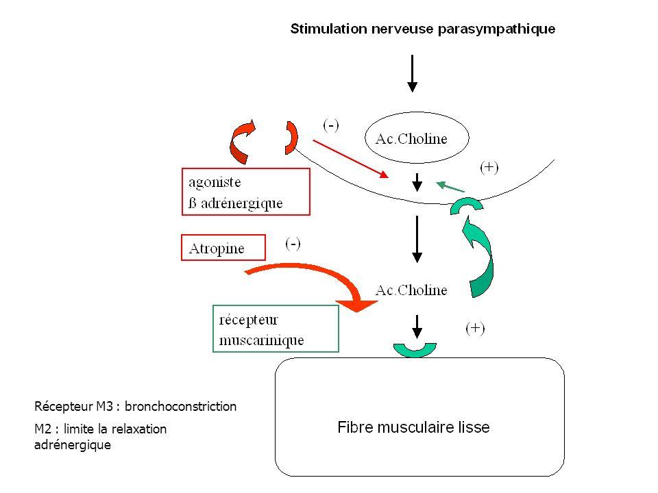 Récepteur M3 : bronchoconstriction M2 : limite la relaxation adrénergique