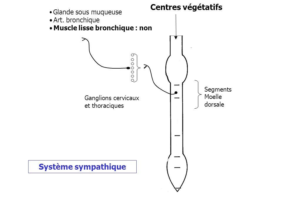 Centres végétatifs Ganglions cervicaux et thoraciques Glande sous muqueuse Art. bronchique Muscle lisse bronchique : non Segments Moelle dorsale Systè