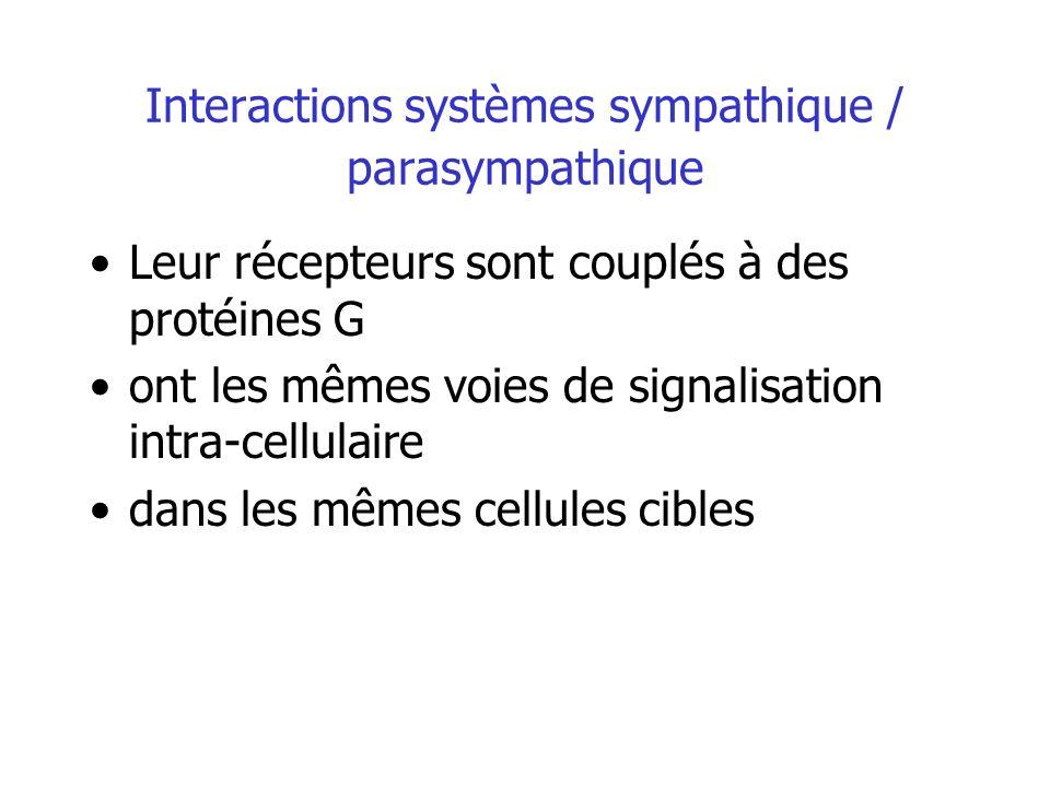 Interactions systèmes sympathique / parasympathique Leur récepteurs sont couplés à des protéines G ont les mêmes voies de signalisation intra-cellulai
