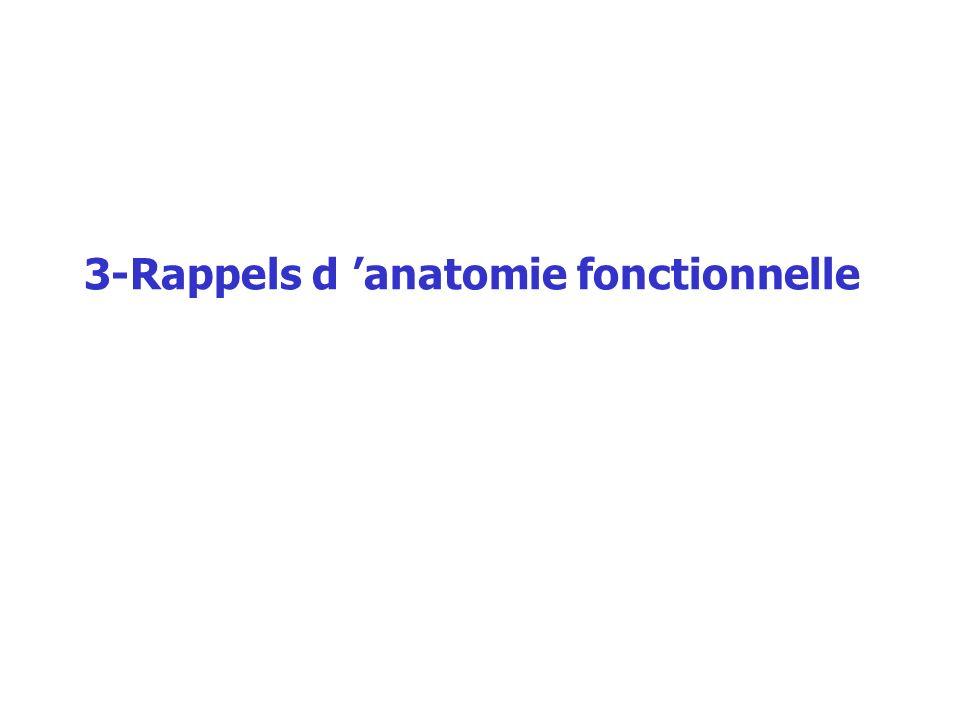 3-Rappels d anatomie fonctionnelle