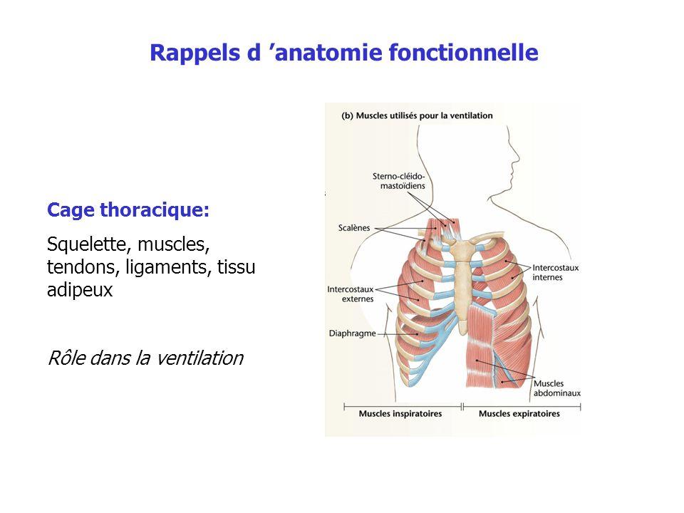 Cage thoracique: Squelette, muscles, tendons, ligaments, tissu adipeux Rôle dans la ventilation Rappels d anatomie fonctionnelle