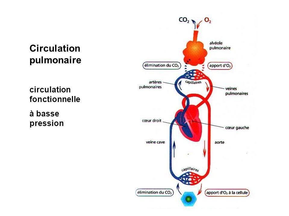 Circulation pulmonaire circulation fonctionnelle à basse pression