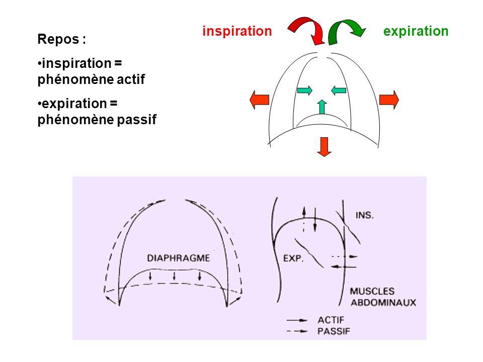 Repos : inspiration = phénomène actif expiration = phénomène passif inspirationexpiration