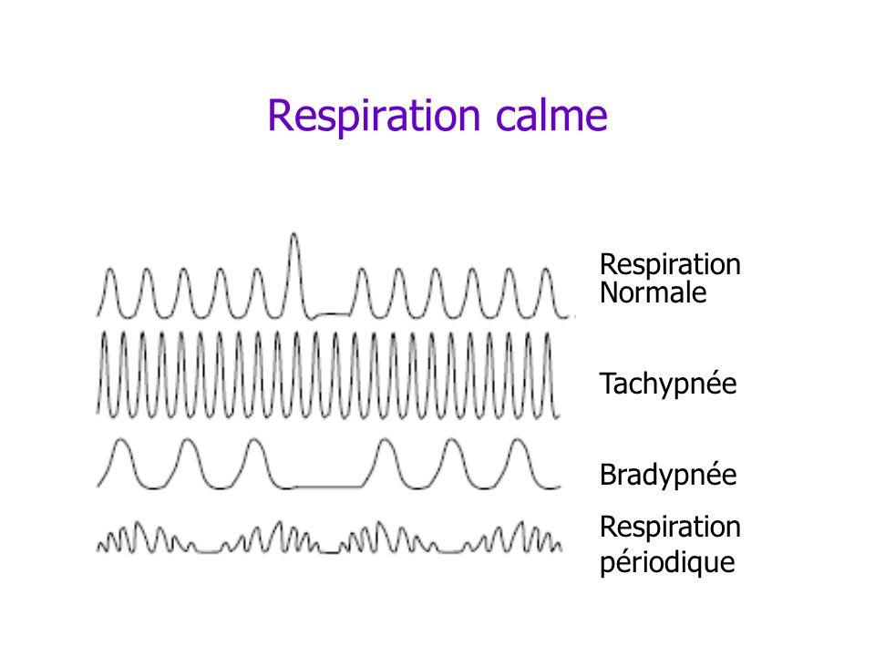 Respiration calme Respiration Normale Tachypnée Bradypnée Respiration périodique
