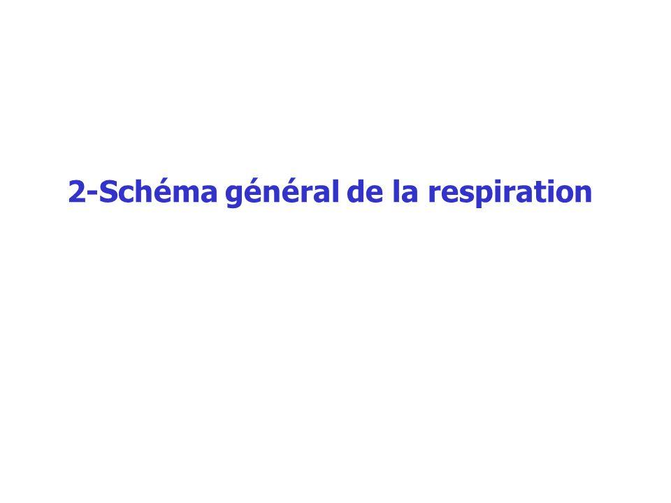 2-Schéma général de la respiration