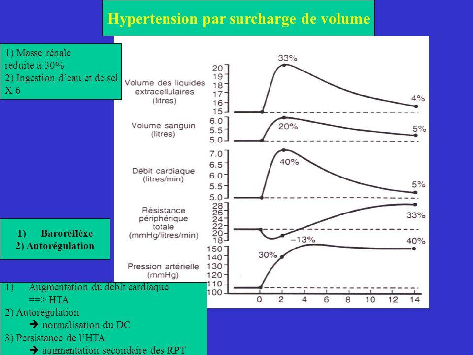 Hypertension par surcharge de volume 1) Masse rénale réduite à 30% 2) Ingestion deau et de sel X 6 1)Baroréflèxe 2) Autorégulation 1)Augmentation du d