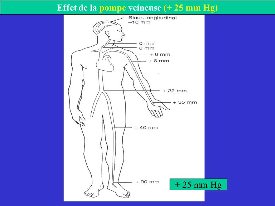 + 25 mm Hg Effet de la pompe veineuse (+ 25 mm Hg)