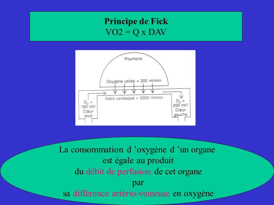 Principe de Fick VO2 = Q x DAV La consommation d oxygène d un organe est égale au produit du débit de perfusion de cet organe par sa différence artéri