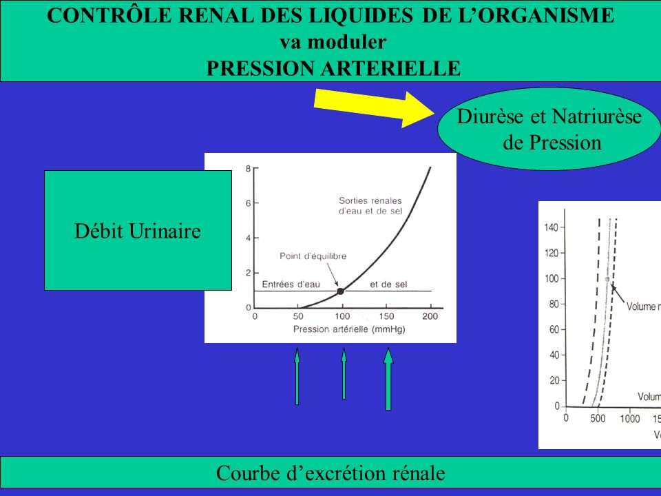 Entrées ou sorties X la normale Analyse graphique du contrôle à long terme de la Pression Artérielle, par le rein Principaux déterminants à long terme de la Pression Artérielle 1) Décalage de la courbe d élimination rénale d eau et de sel 2) Position de la droite représentant les entrées d eau et de sel