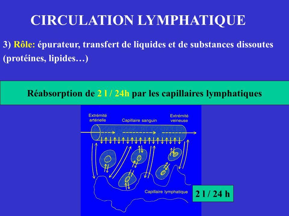CIRCULATION LYMPHATIQUE 3) Rôle: épurateur, transfert de liquides et de substances dissoutes (protéines, lipides…) Réabsorption de 2 l / 24h par les c