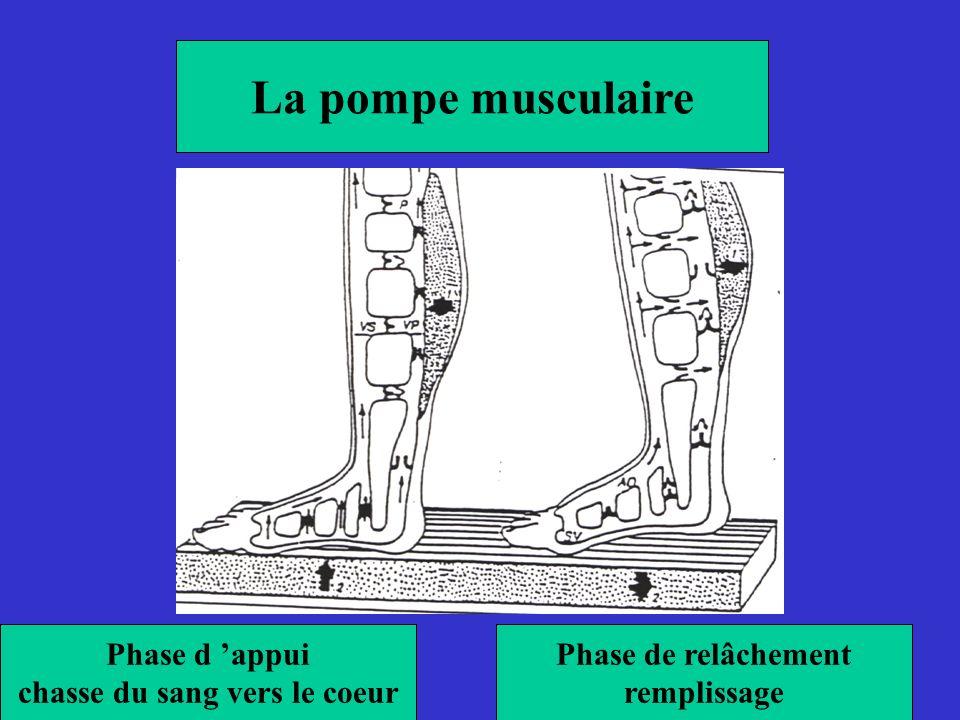 La pompe musculaire Phase d appui chasse du sang vers le coeur Phase de relâchement remplissage