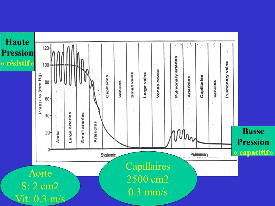 Haute Pression « résistif » Basse Pression « capacitif » Aorte S: 2 cm2 Vit: 0.3 m/s Capillaires 2500 cm2 0.3 mm/s