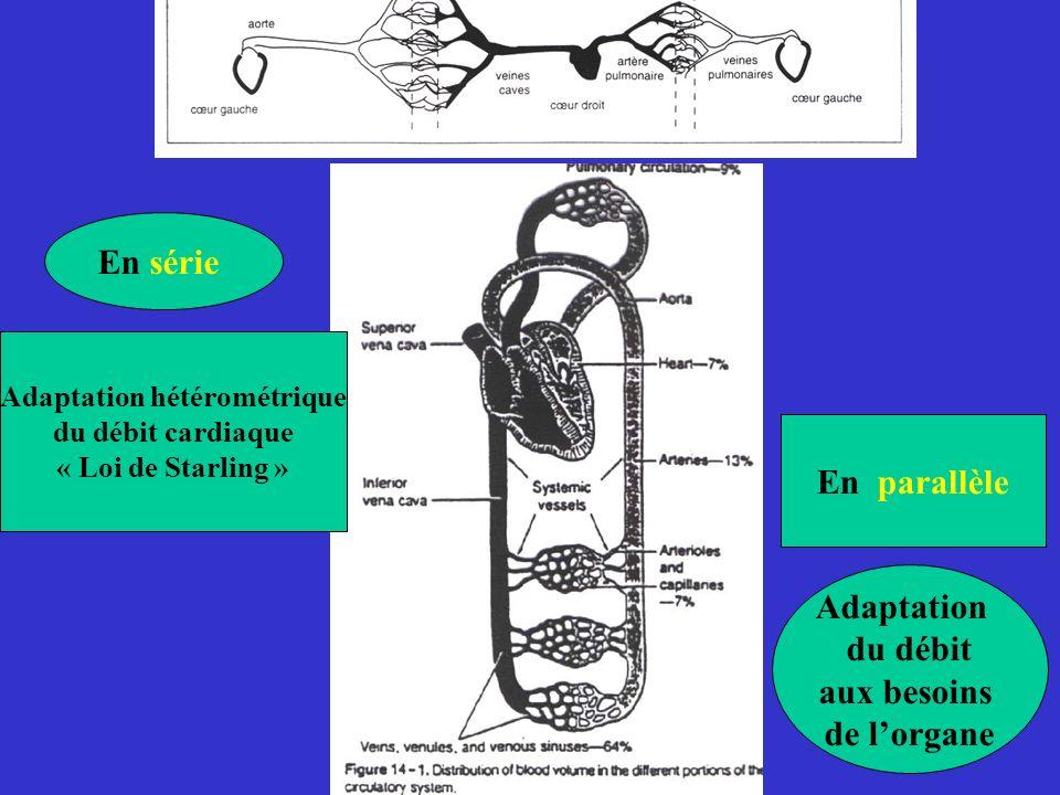 En série En parallèle Adaptation hétérométrique du débit cardiaque « Loi de Starling » Adaptation du débit aux besoins de lorgane